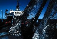 Рыбаки мечтают о сети